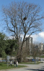 'click' to view Vanier Park's Eagles at home.